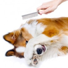 Dog grooming north shore sydney