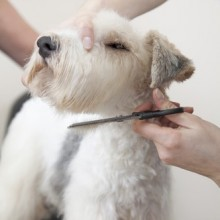 Services Snowy's Mobile Dog Grooming